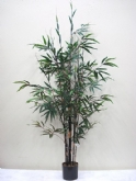 Black Bamboo Tree 5' & 7'